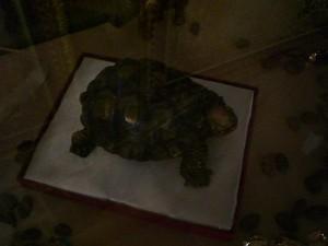 черепаха из шоколада